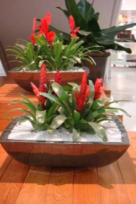 Bromelija cvece biljka