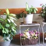 Kako se zaštititi od bolesti i štetočina kod sobnog cveća