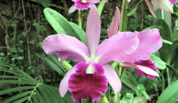 orhideje odrzavanje nega