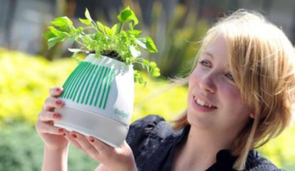 prehranjivanje sobnog cveca