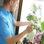 Saveti za razmnožavanje sobnih biljaka