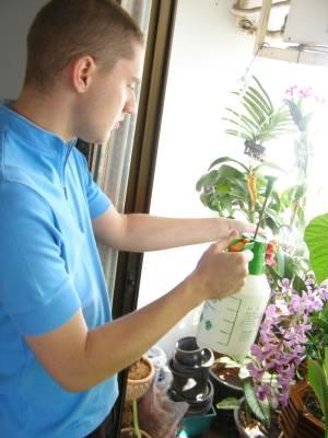 razmnozavanje sobnih biljaka
