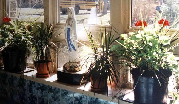Kakvi su potrebni toplotni uslovi za gajenje sobnog cveća