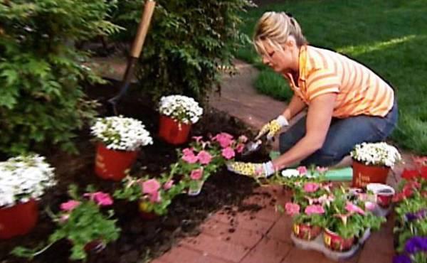 zalivanje sobnog cveca