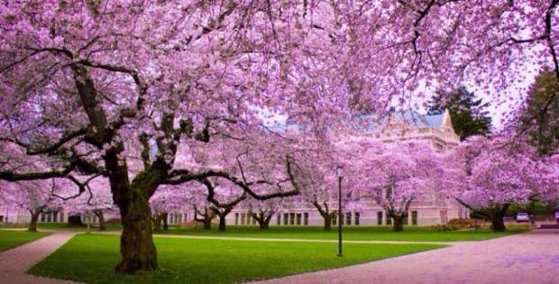 Najlepše ukrasno drveće, koje našem vrtu daje posebnu čar