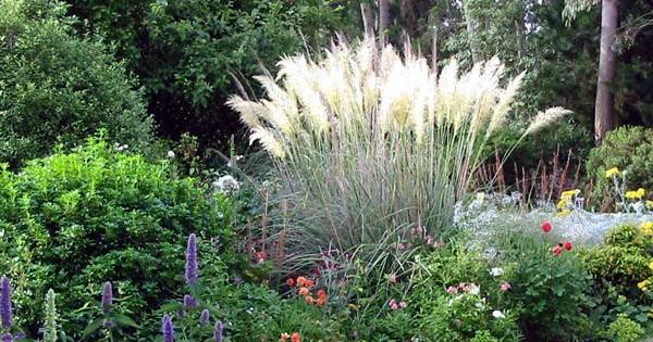 Ukrasne trave i perene, pravo osveženje vrta