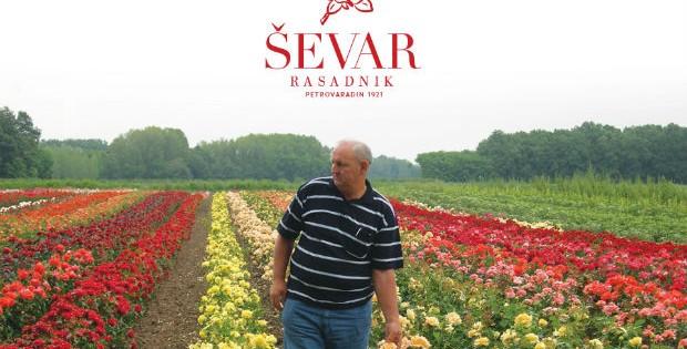Rasadnik Ševar, Petrovaradin – širi svoju ljubav i znanje