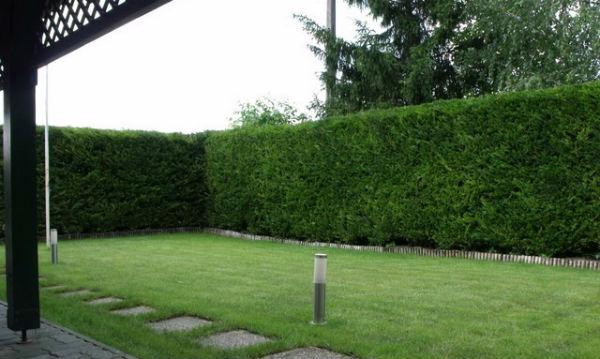 cudesna ziva ograda 2