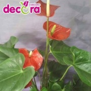 cvecara decora 7