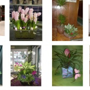 Cvetni vrt 1